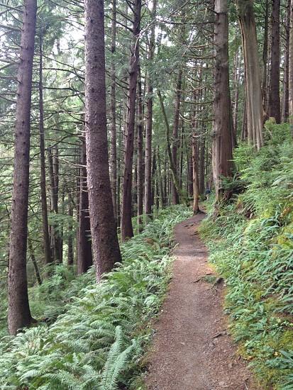 Oregon Coast photo