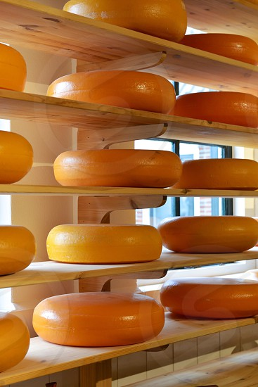 Circles of Cheese photo