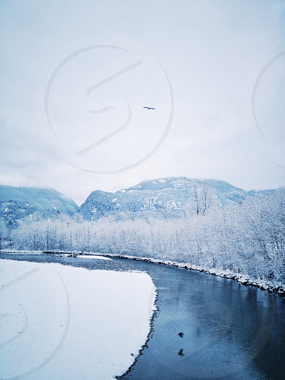 Winter river scene in mountains with Eagle flying  photo