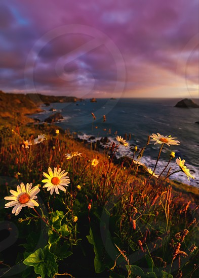 Landscape color image of a beautiful Pacific Northewest sunset with wildflowers in the foreground. photo