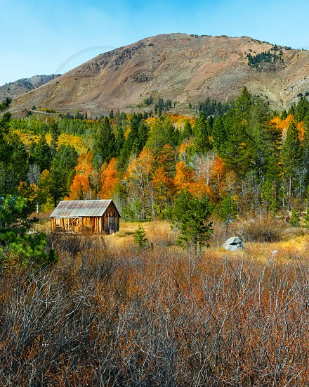 Autumn fall colors cabin  photo