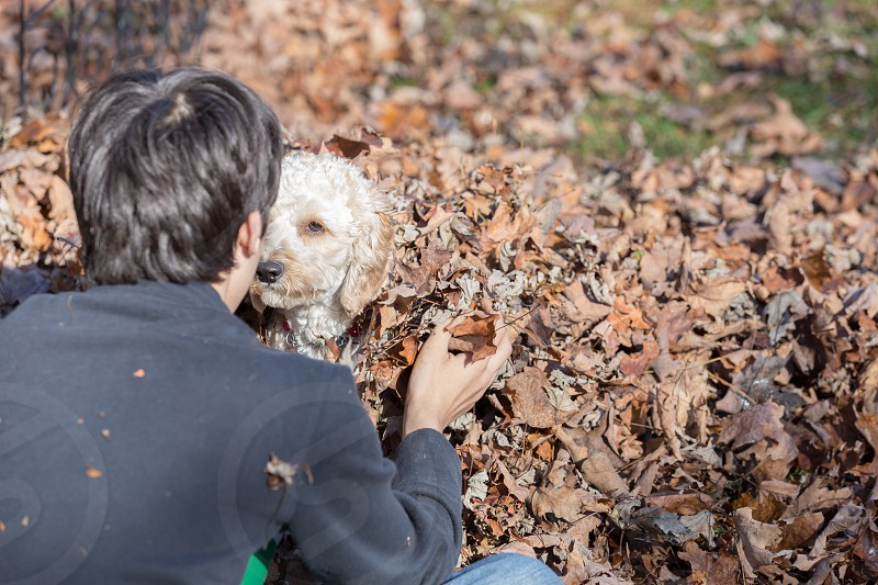 A boy and his dog playing in the fall leaves photo