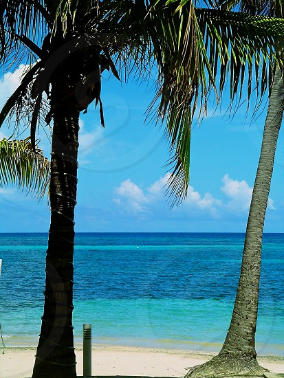 coconut palm tree and ocean view photo