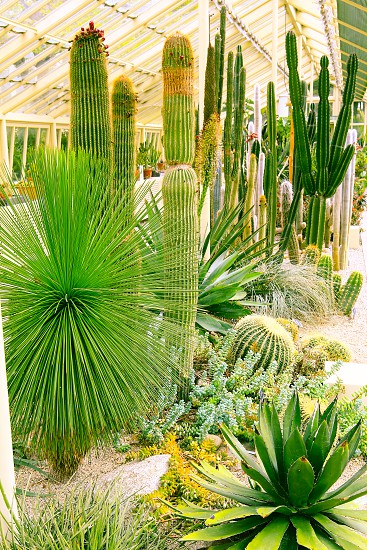 Tropical green plants in a greenhouse photo