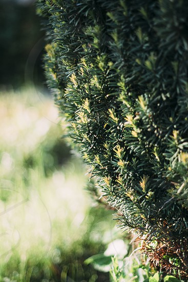 Green bush photo