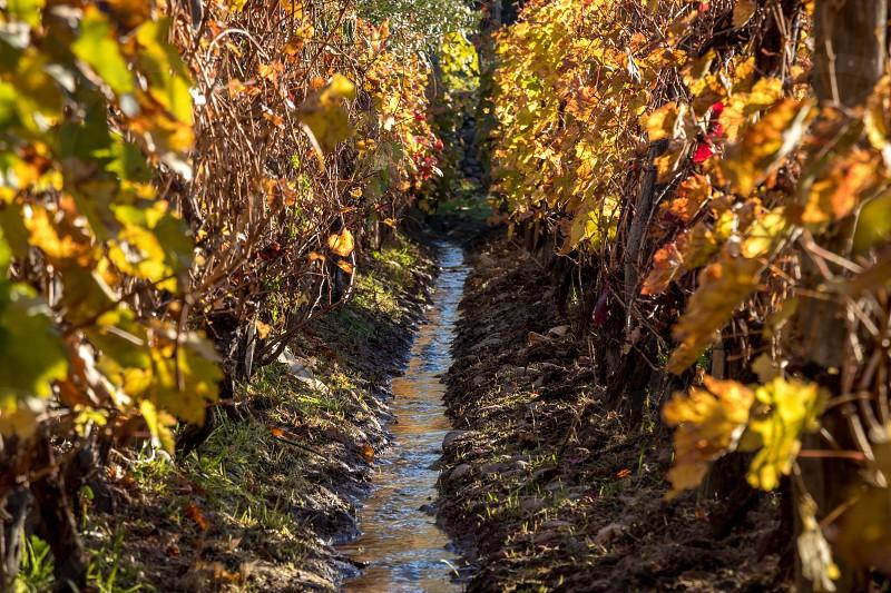 vineyard irrigation photo