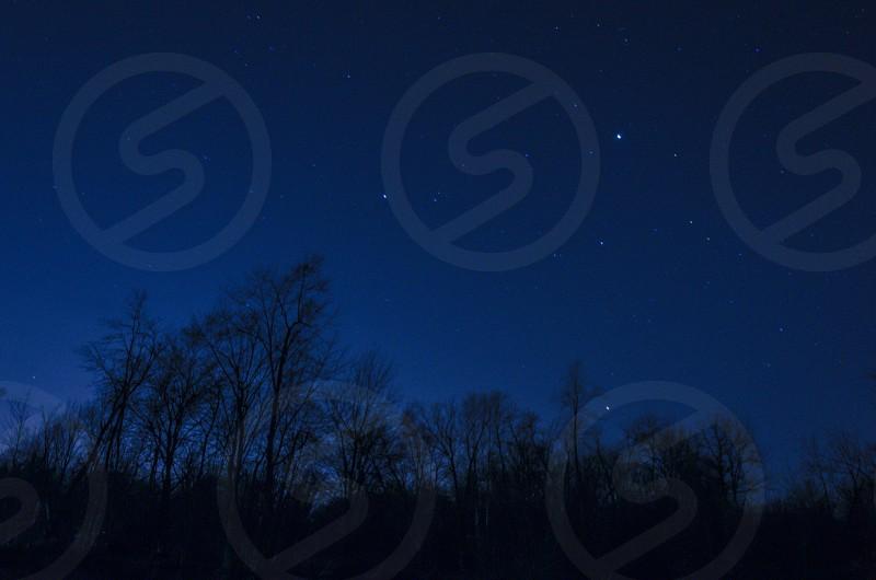 stars trees photo
