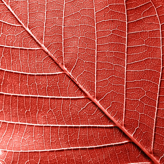 Texured natural veined leaf pattern background for layout in a color of the year 2019 Living Coral. Fashionable pantone trendy color of spring-summer 2019 season. Macro photo. Top view photo