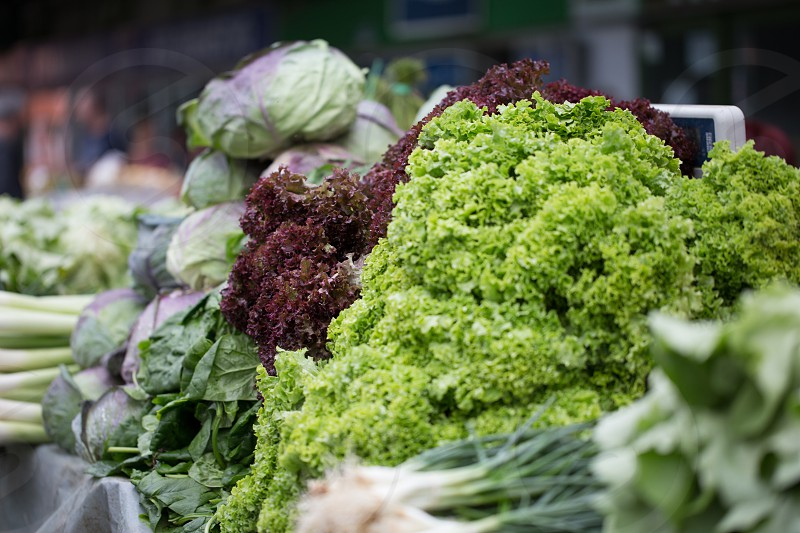 Green market in Belgrade Serbia - lettuce at market stall photo