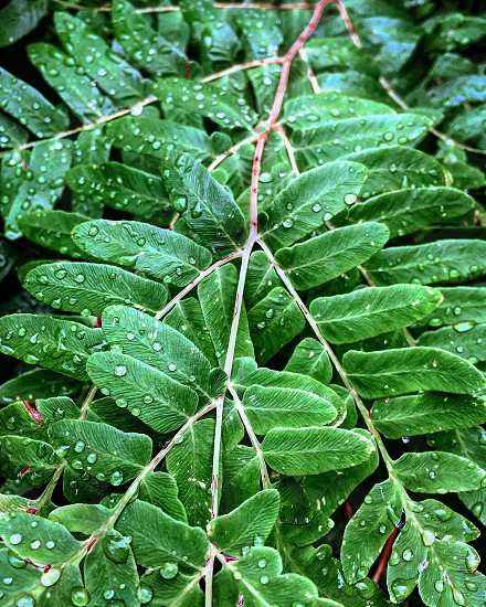 close up photo of oval shape leaf plant with dew drops photo