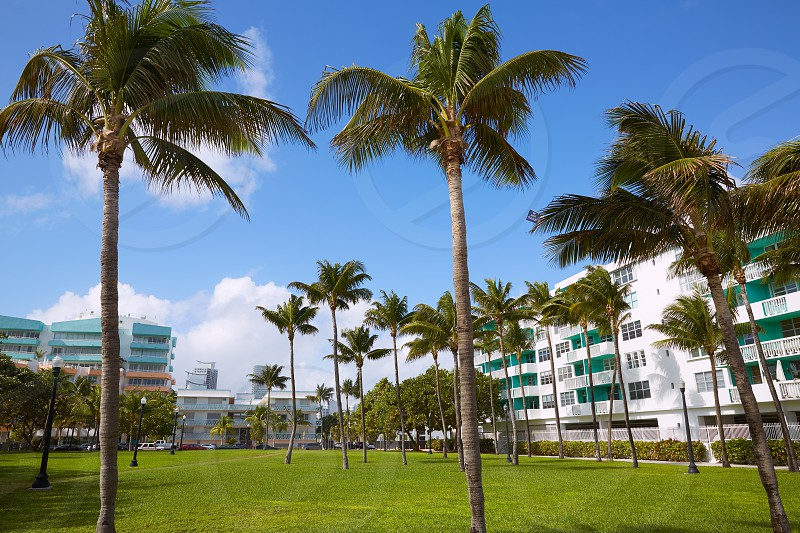 Miami south Beach park with palm trees in Florida USA photo