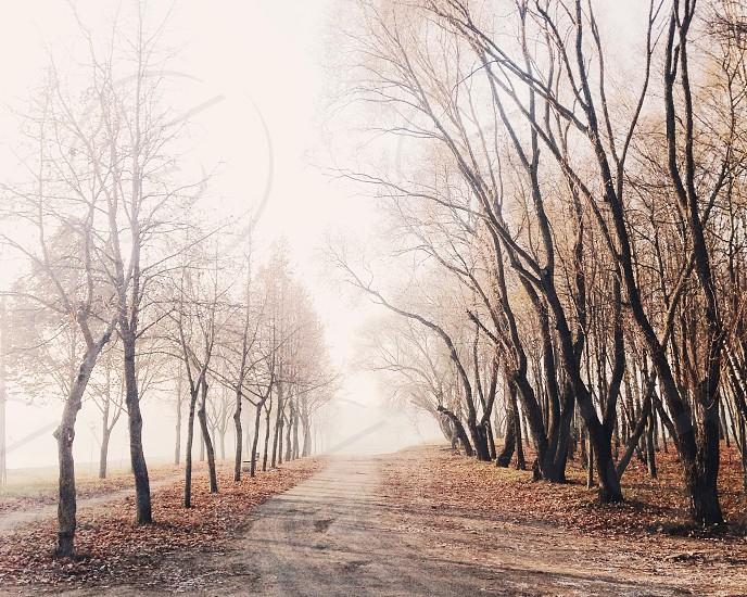 dirt road through foggy bare trees photo