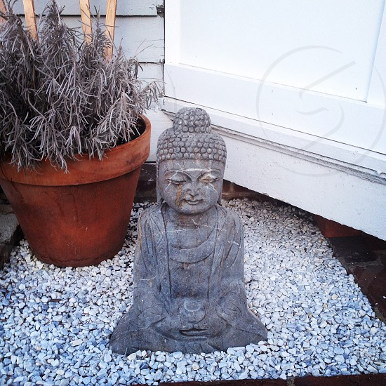 The Buddha as seen in New Haven Connecticut. photo