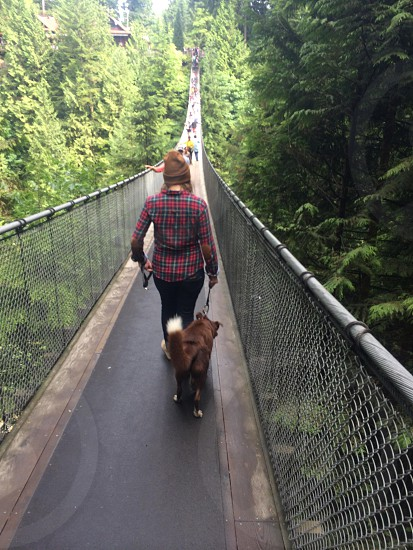 Capilano Suspension Bridge Park in Vancouver BC.  photo