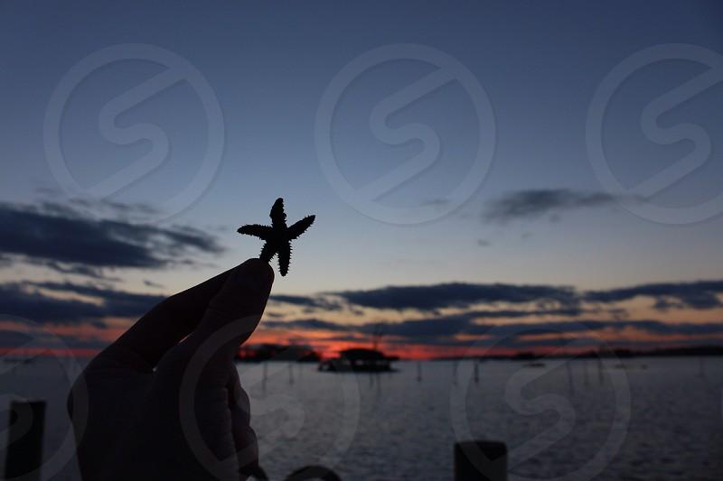 small starfish photo