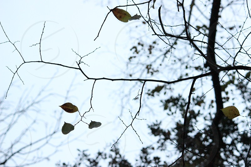 spooky eerie leaves branches halloween dusk creepy still photo
