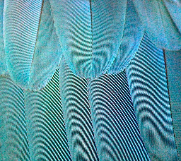 Parrot feathers photo