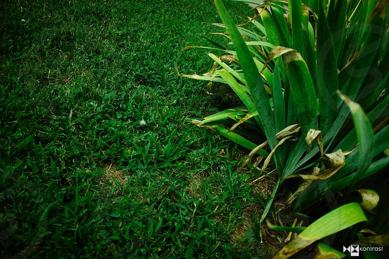 green nap photo