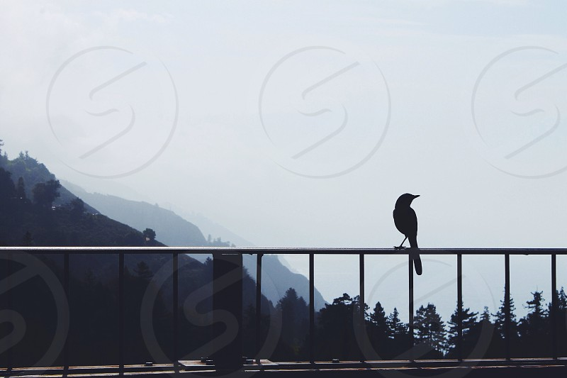 bird silhouette on rails photo