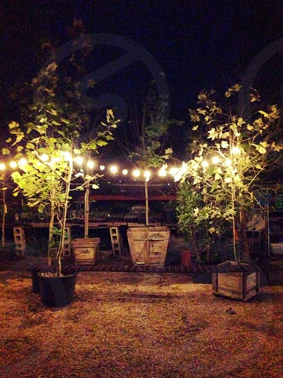 A string of party lights between two trees in planter boxes. A single bench between and shelves holding small plants in the background. photo