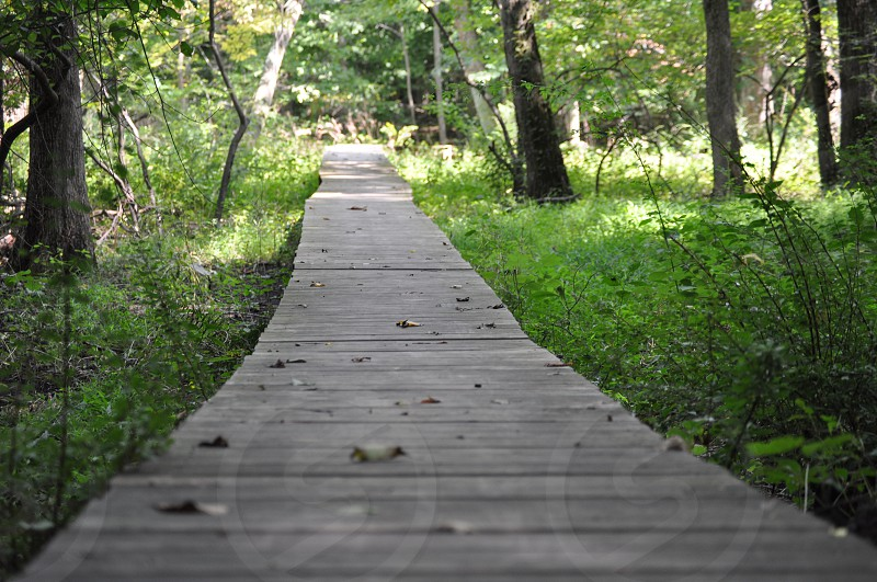 Walk in the Woods Path photo