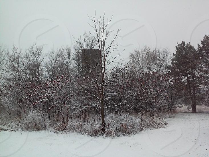 Nothing like fresh snow. photo