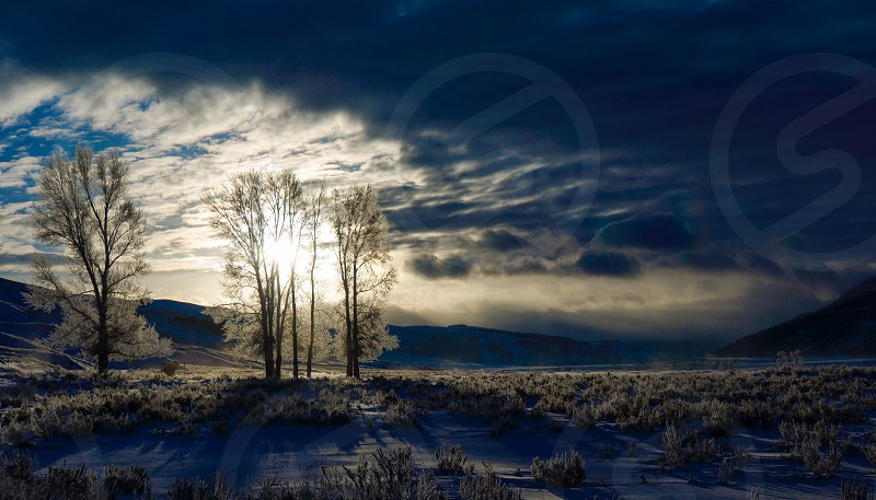 Moody morning in the park. (Yellowstone's Lamar Valley January 2014) photo