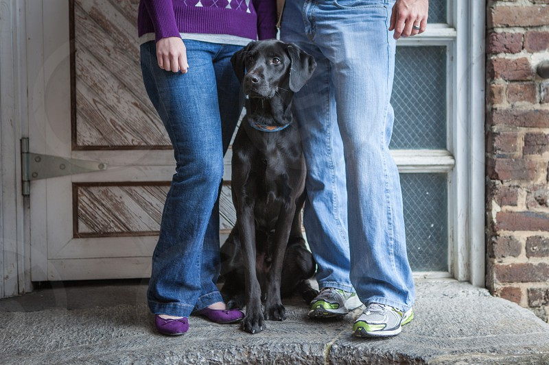 black labrador in the middle of couple standing  photo