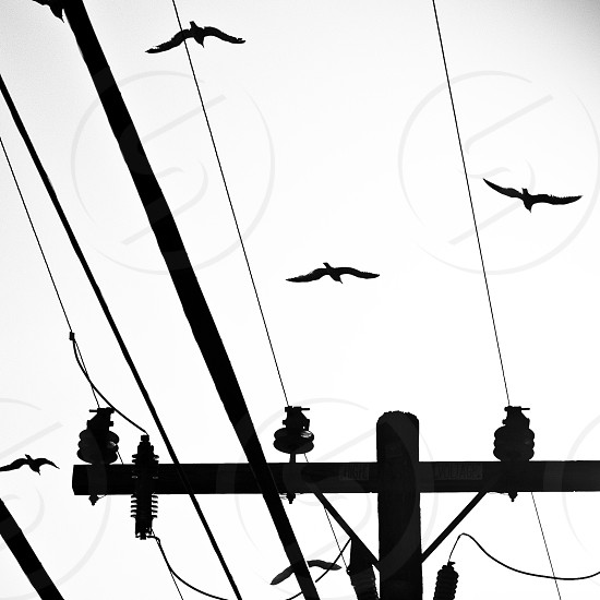 black coated wire photo