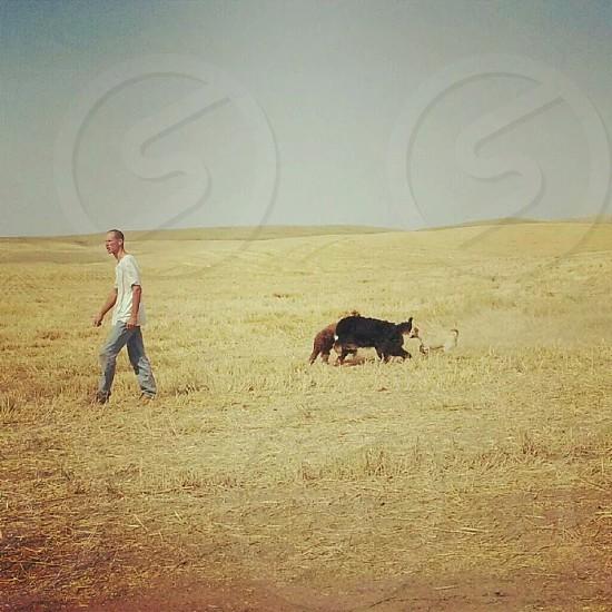 Wheat Man Dogs photo