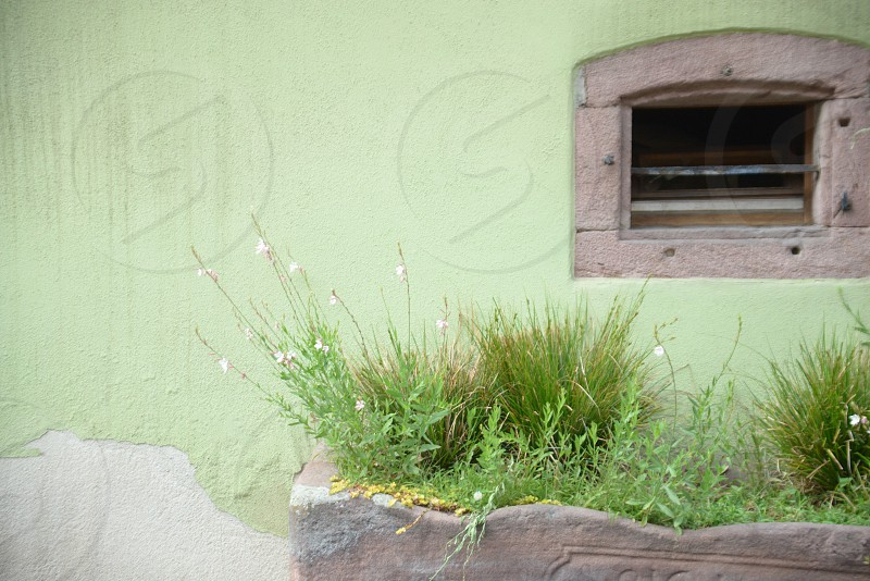 Green ancient wall with small window and green plants in small town of France photo