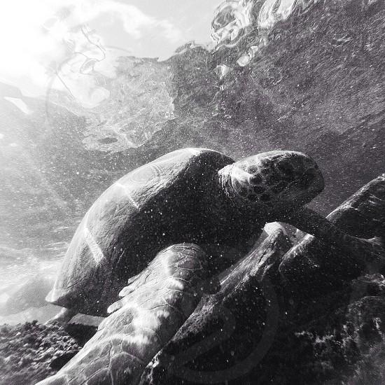turtle crawling underwater during daytime photo