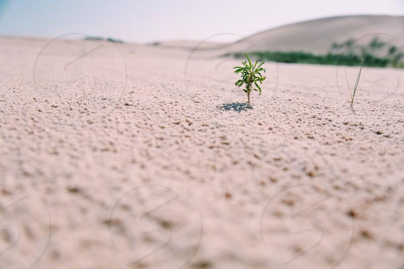 green seedling on brown soil at daytime photo