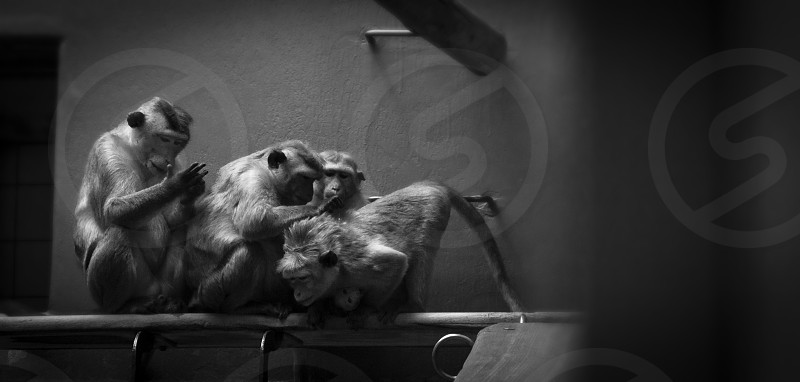 A Working Party was of monkeys in their daily lives. photo