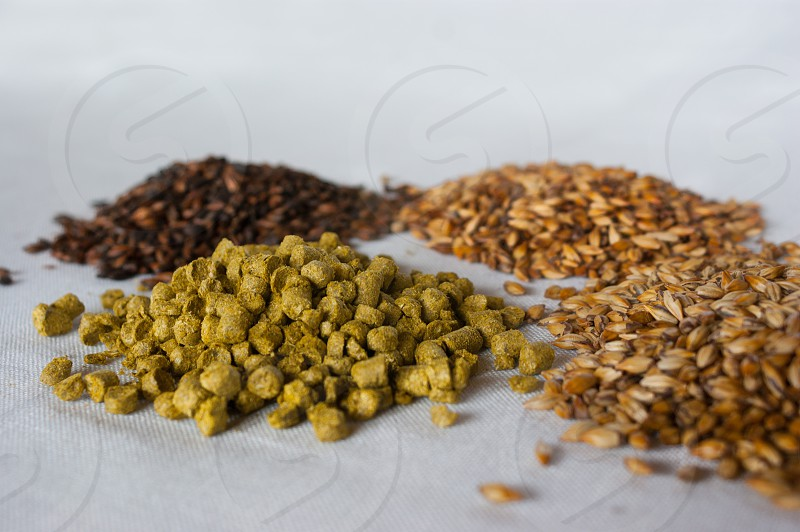 malta hops and barley over a white background. photo
