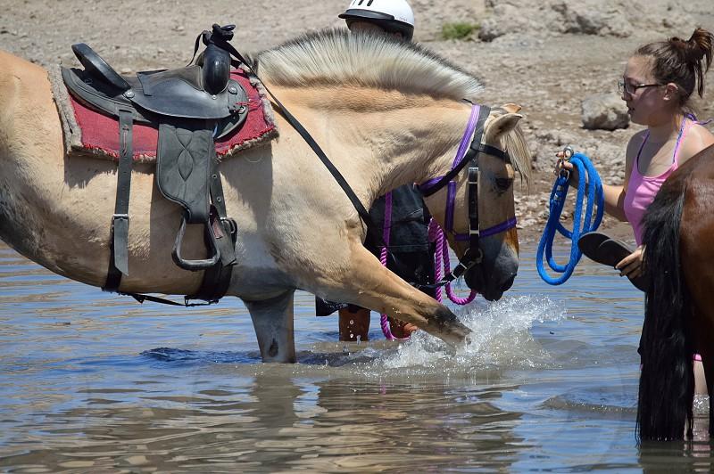 Horse play lake pleasant photo