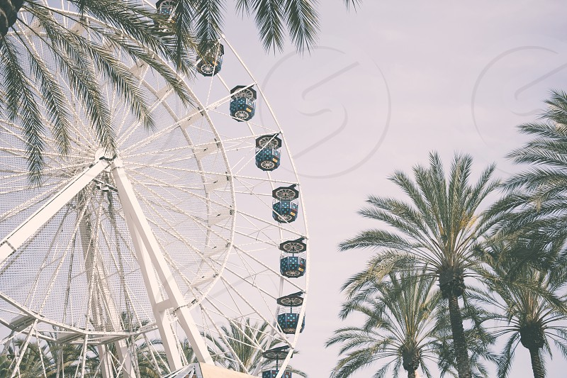 A ferris wheel and palm tree landscape background photo