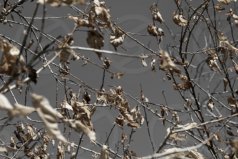 Winter leaves dry cold  photo