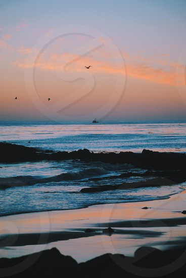 3 birds flying over the sea on a sunset view photo