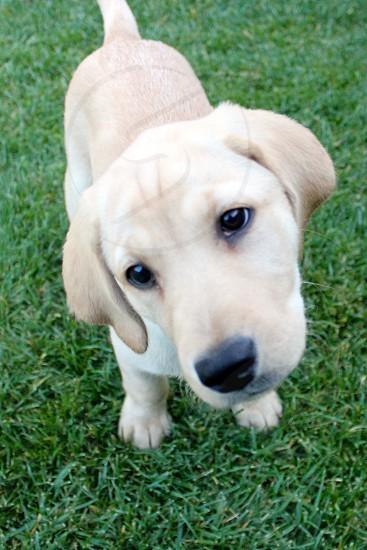 puppy dog inquisitive photo
