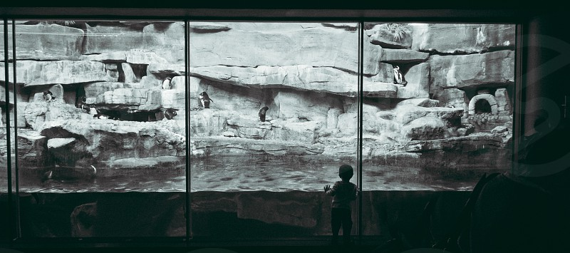boy standing in front of glass showing rock surface in black and white footage photo