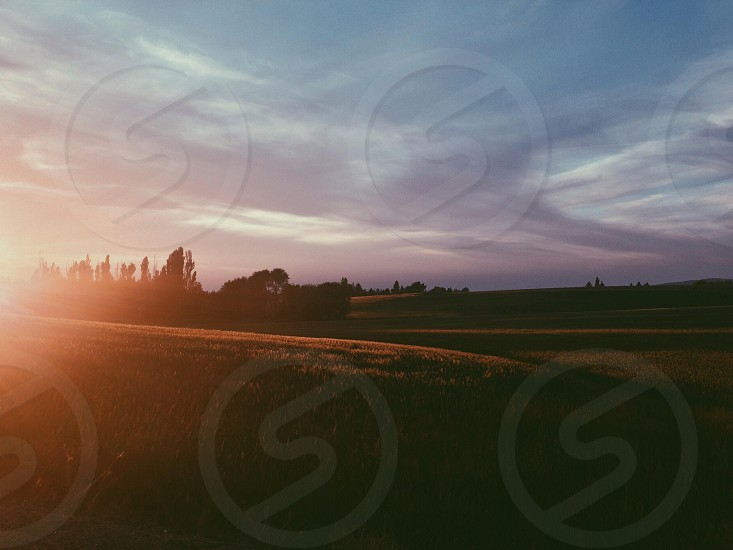 green fields photo