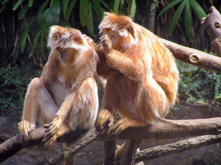 orange monkey on wooden branch photo
