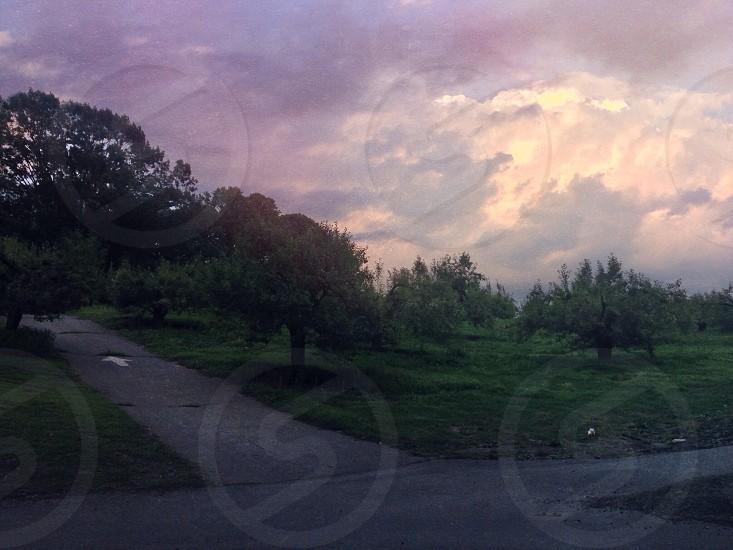 Summer evening sunset over an orchard outside Philadelphia. photo