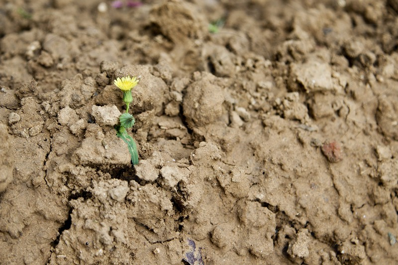 a small yellow flower photo