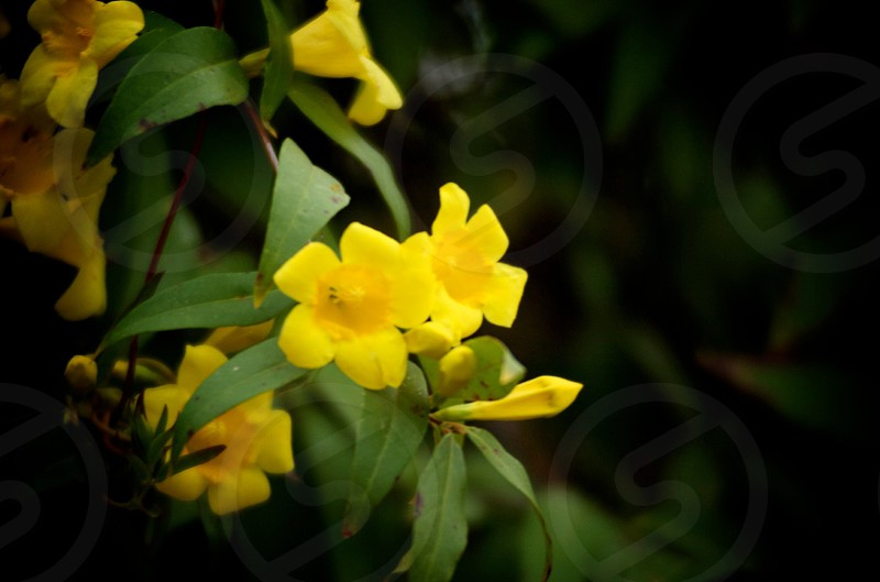 closeup photography of yellow petaled flower photo