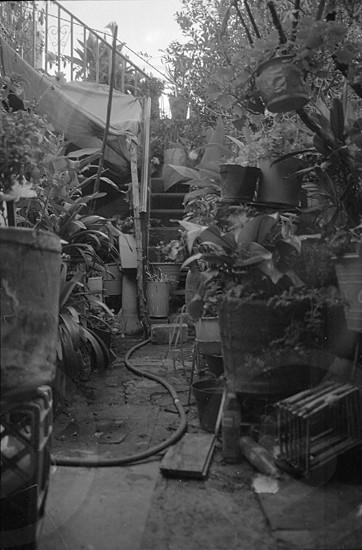 Backyard photo