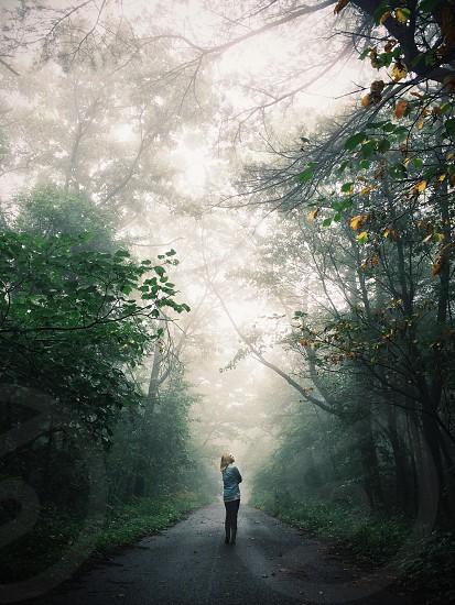 Mystical woods photo