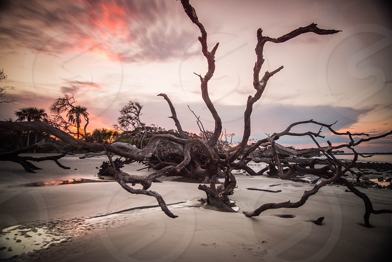 took shots of drift wood and sunset pictures  photo