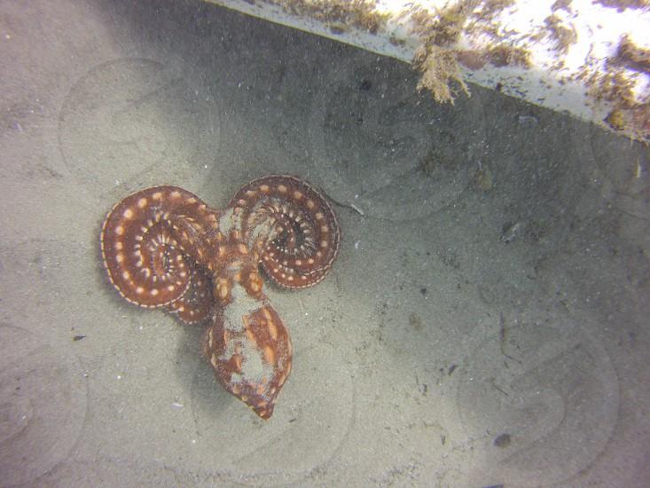 Squid ocean underwater scuba diving  photo